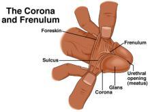 Frenulum breve penis Frenulum Breve: